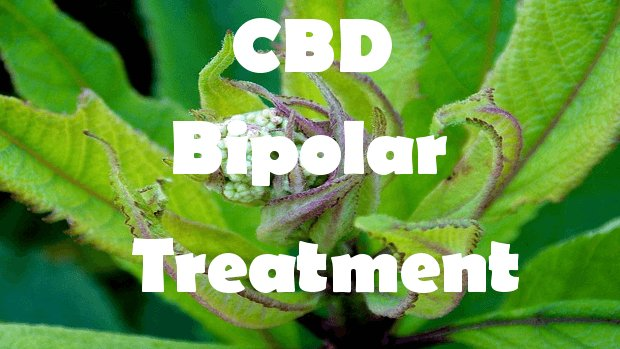 Bipolar and CBD Oil: Does it Work For You?