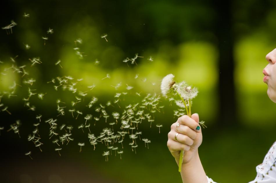 Dandelion-seeds.jpg